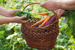 Services_Beets and Carrots_pic